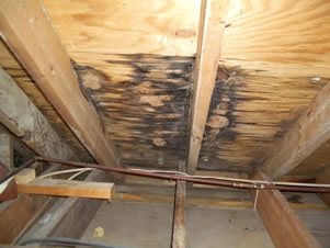 Professional Home Inspections Servicing Photos